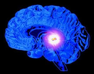 pineal gland