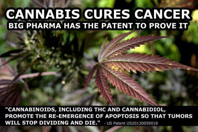 cannabis oil